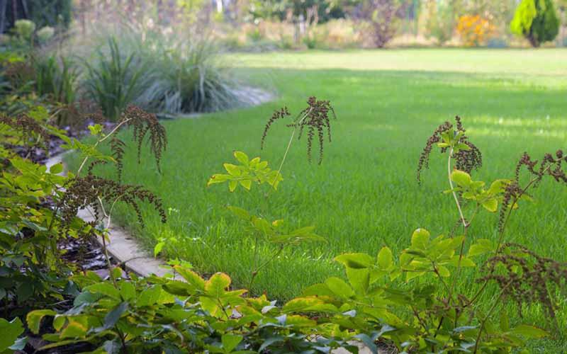 návrhy záhrady